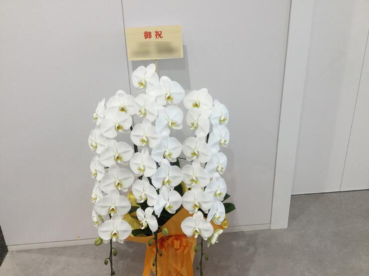 移転祝い胡蝶蘭