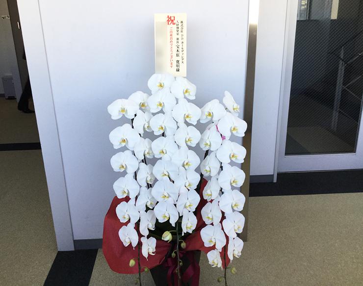 誕生日祝い胡蝶蘭