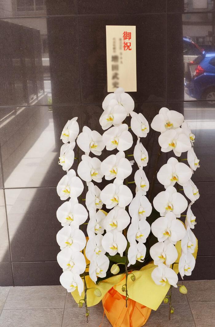 新社屋御祝い胡蝶蘭