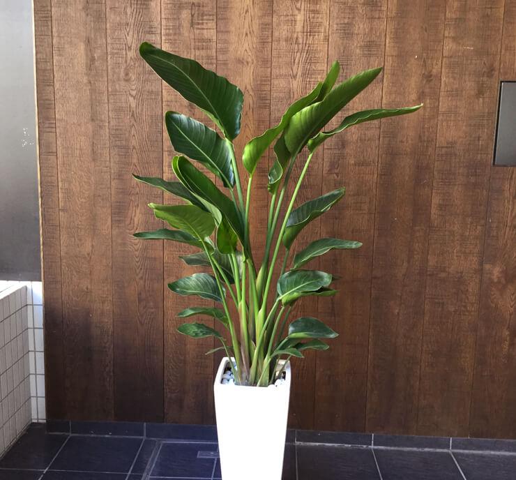 移転祝い観葉植物