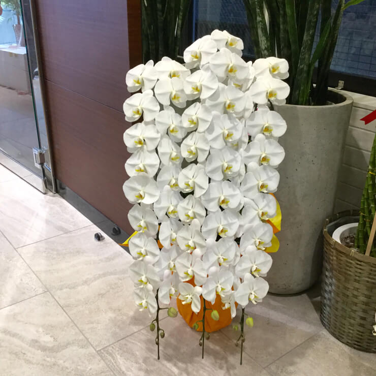 港区東麻布 河野設計東京様の移転祝いにお届けした胡蝶蘭