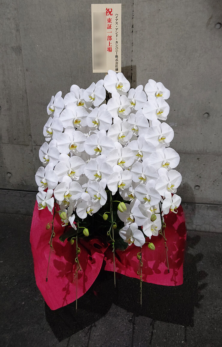 上大崎 ハイアス・アンド・カンパニー㈱様の一部上場祝いにお届けした胡蝶蘭五本立て