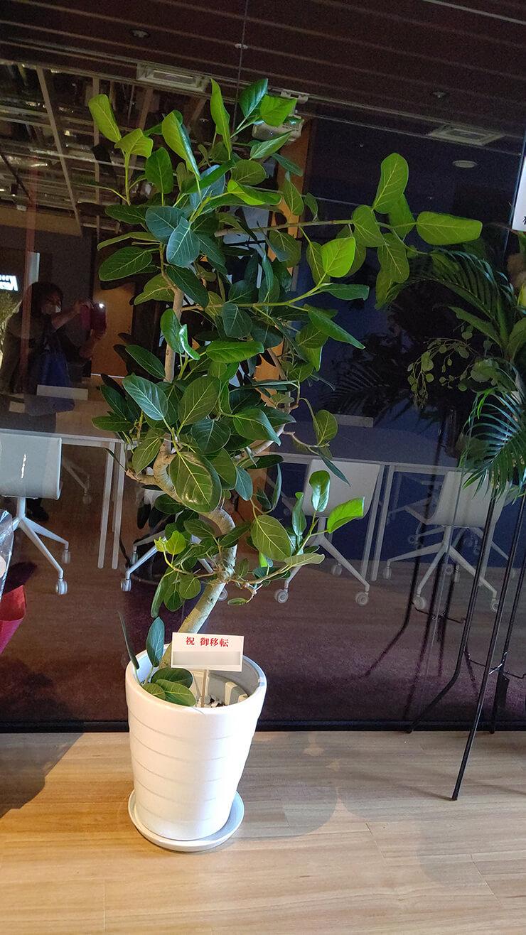 渋谷区桜丘町 ㈱ITI様の移転祝いにお届けした観葉植物